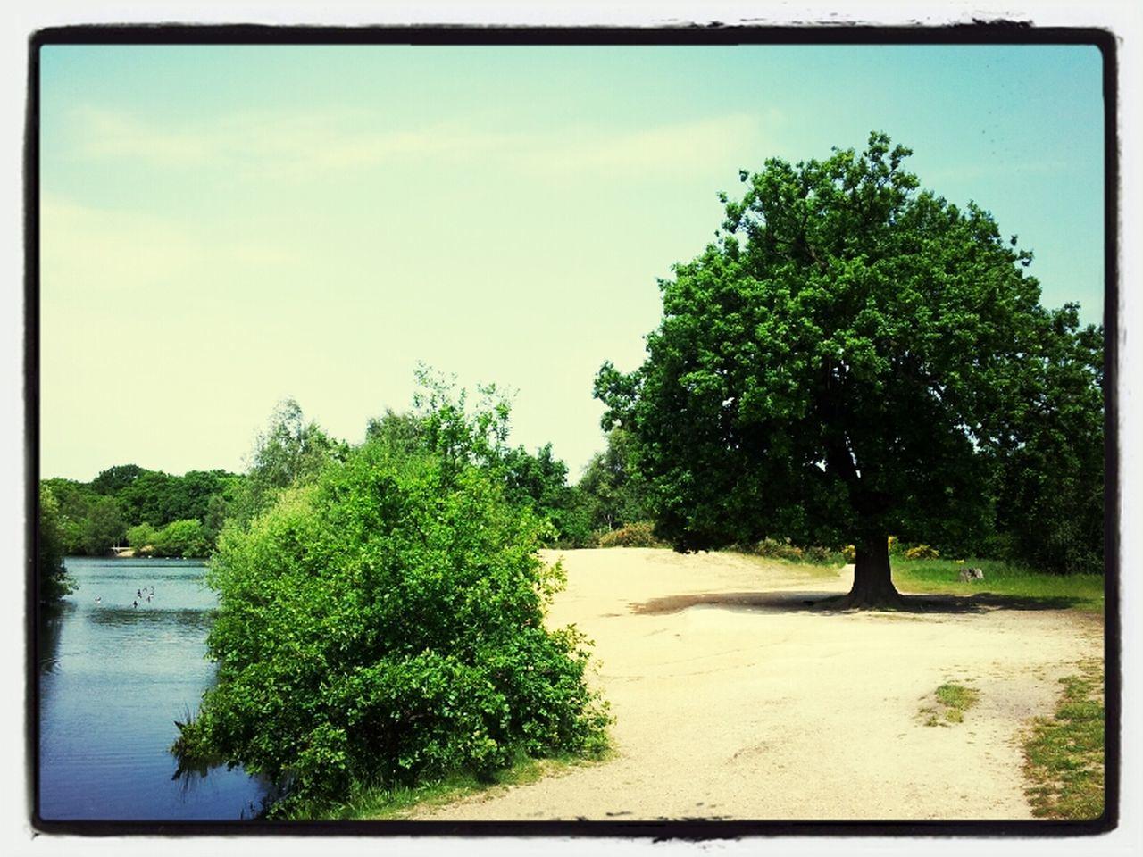 Eagle Ponds