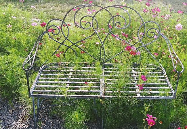 Lady like fade Growth Green Color No People Nature Plant Grass Outdoors Day Flower Beauty In Nature Tree Close-up Freshness Fragility Flowers_collection Benches_Of_The_World_Unite Metalwork Park - Man Made Space Object Photography Statues And Monuments Flower Head Wild Rose Pink Color