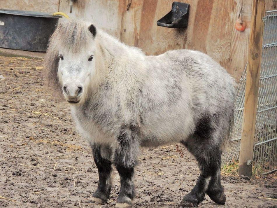 Alpaca Animal Themes Close-up Day Domestic Animals Livestock Mammal No People One Animal Outdoors Pony Standing