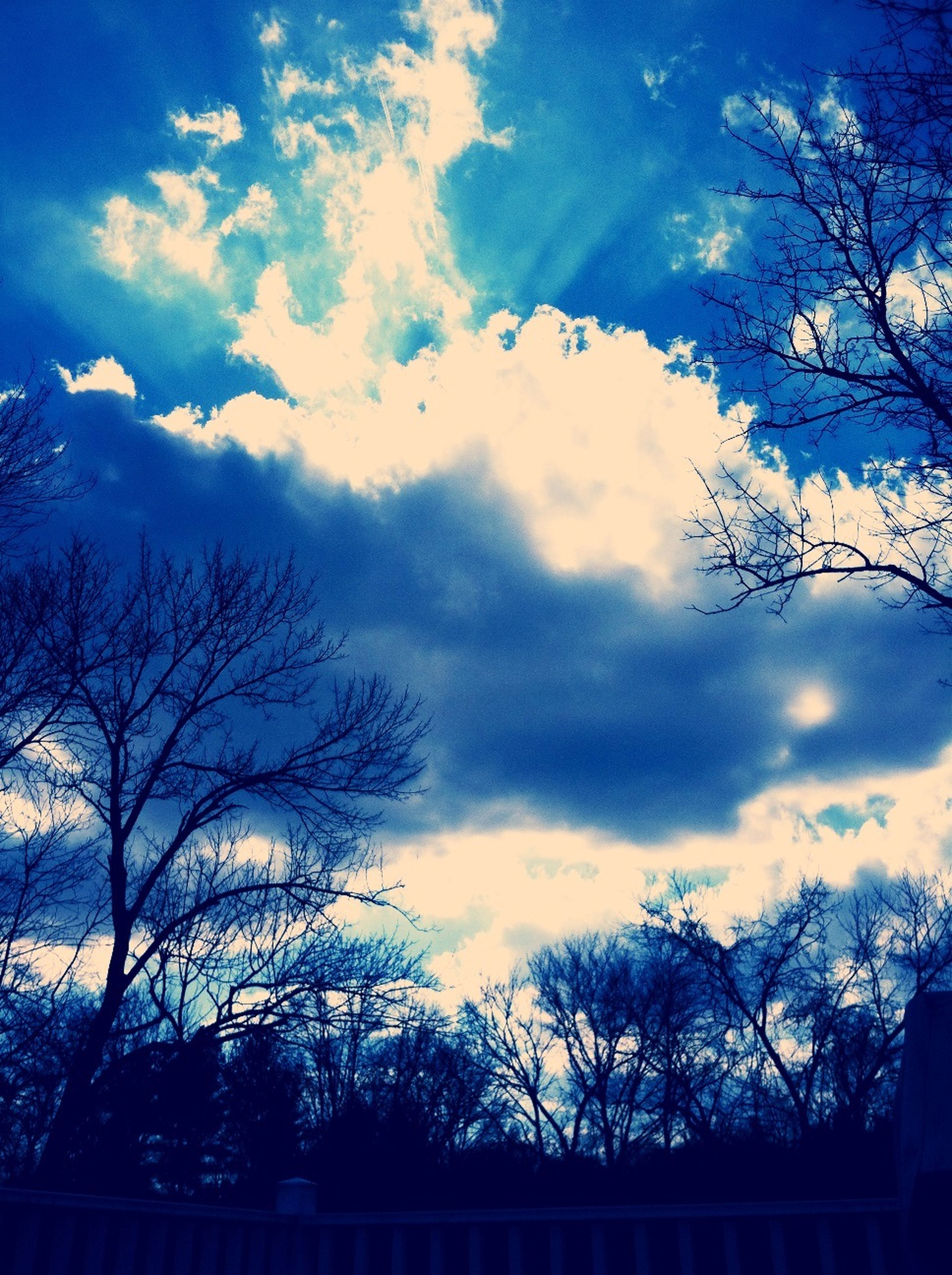tree, bare tree, silhouette, sky, cloud - sky, tranquility, branch, scenics, beauty in nature, tranquil scene, low angle view, cloud, nature, cloudy, blue, sunset, dusk, outdoors, no people, idyllic