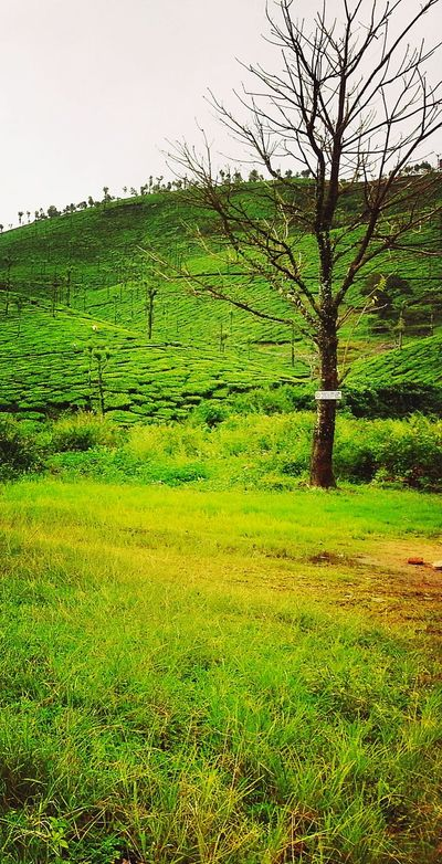 Died TreeMountain View Mountain Range Mountains And Sky Green Color Green Grass Green Leaves Died-out Showcase: February Grassland Hill Views Hills Hill Station Hill Side Views Femalephotographerofthemonth Pastal Power
