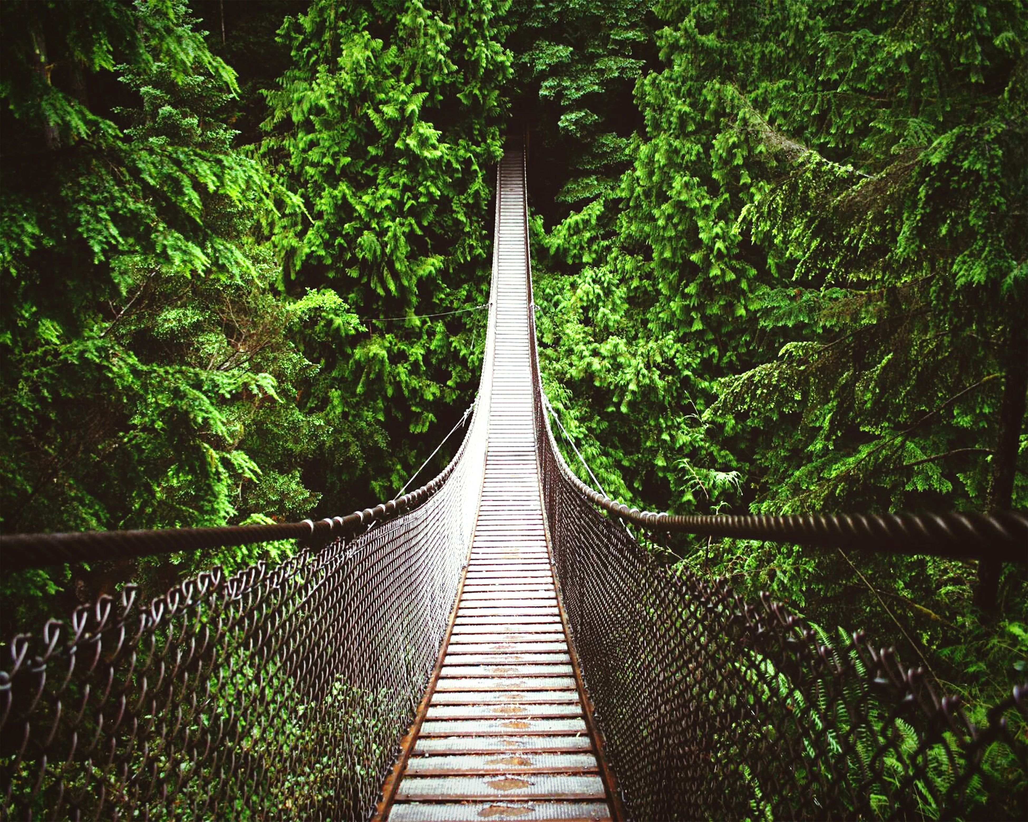 tree, growth, railing, green color, the way forward, plant, nature, forest, lush foliage, footbridge, tranquility, metal, diminishing perspective, green, beauty in nature, day, no people, outdoors, high angle view, branch