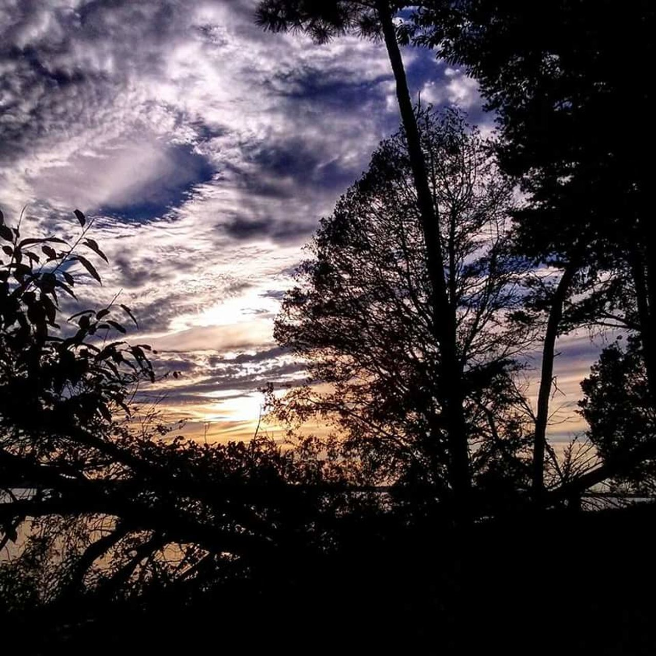 tree, nature, low angle view, sky, beauty in nature, scenics, silhouette, tranquil scene, no people, tranquility, growth, cloud - sky, outdoors, sunset, forest, tree trunk, sunlight, day, branch