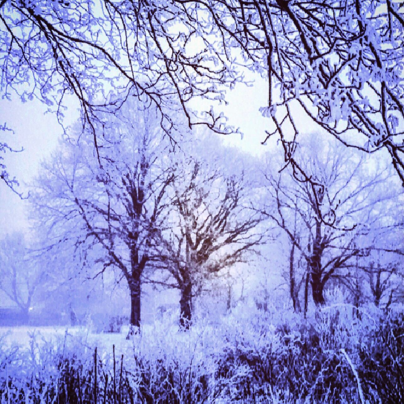 Foto Astorp Photography Fotografi Wintertime Winter Winterwonderland Vinter Vinterbild
