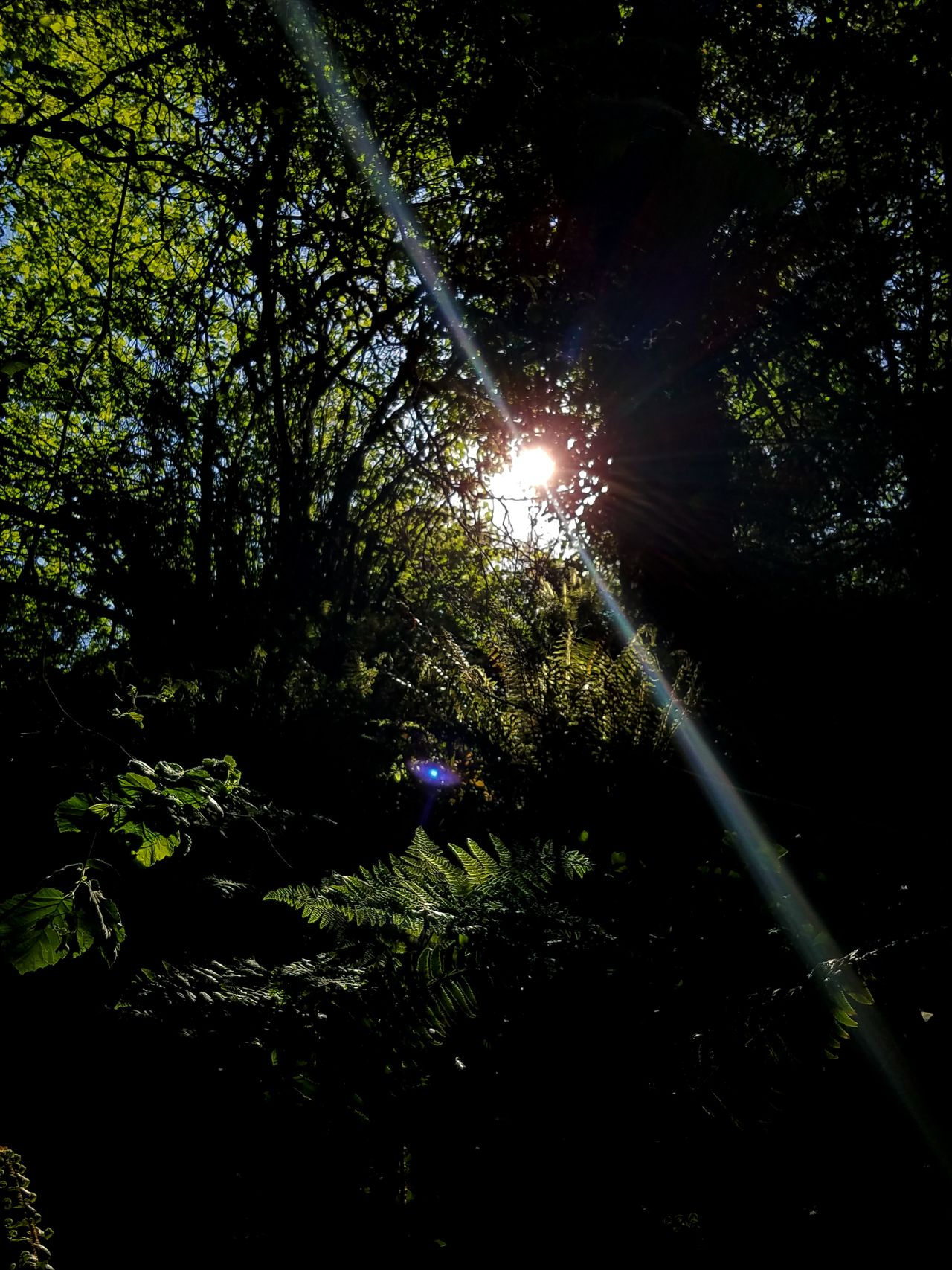 Sun threw her tree's Epic Shot Photography Eye For Photography Getty+EyeEm Collection Getty & EyeEm Collection Nature_collection Beautiful Spring Day EyeEm Nature Lover Eyeem_x_getty_collection Nature Photography The Great Outdoors With Adobe Gettyimagesinstagramgrant Taking Photos Northwestnature Nature_collection Landscape_collection EyeEmNatureLover Tree_collection  Wild & Pure Getty X EyeEm Images EyeEmxGettyImages EyeEm Best Shots - Nature Getty Image-collection Getty X EyeEm Washington State Park Nature's Diversities Gettyimagesgallery Eye4photography