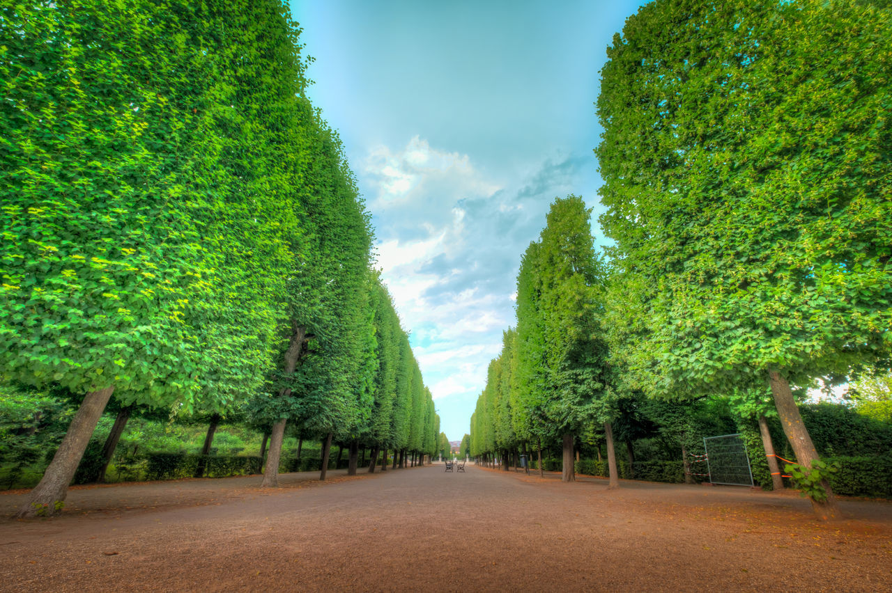 Agriculture Alley Beauty In Nature Cloud - Sky Cloudy Sky Day Field Green Color Growth Landscape Nature No People Outdoors Partly Cloudy Day Scenics Schonbrunn Garden Schönbrunn, Vienna Austria Sky The Way Forward Tree Tree Alley