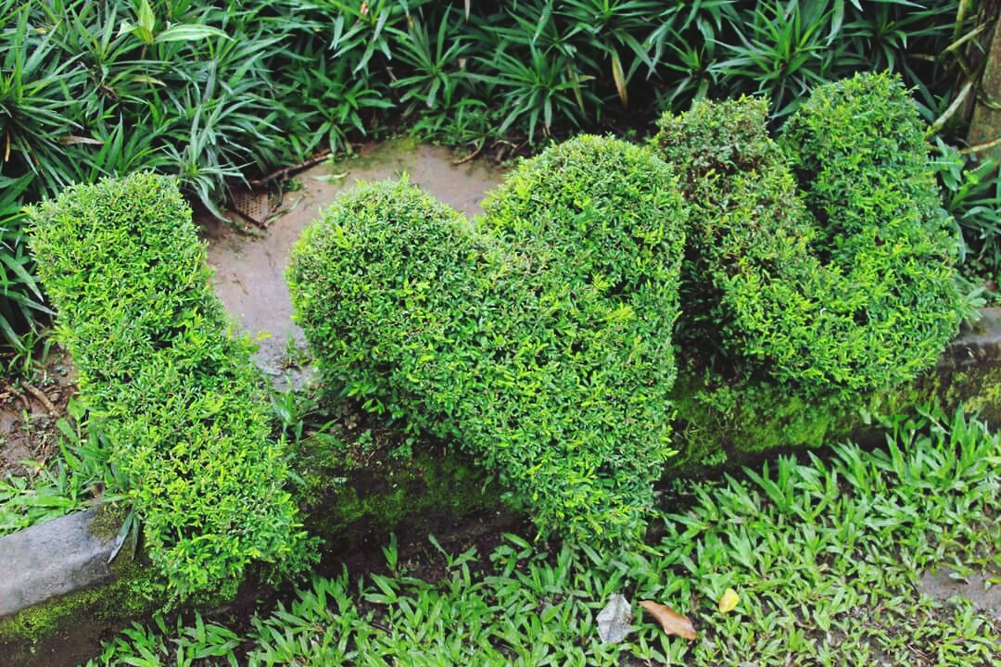 green color, growth, plant, high angle view, leaf, nature, moss, growing, grass, green, field, outdoors, no people, day, close-up, beauty in nature, freshness, lush foliage, potted plant, rock - object