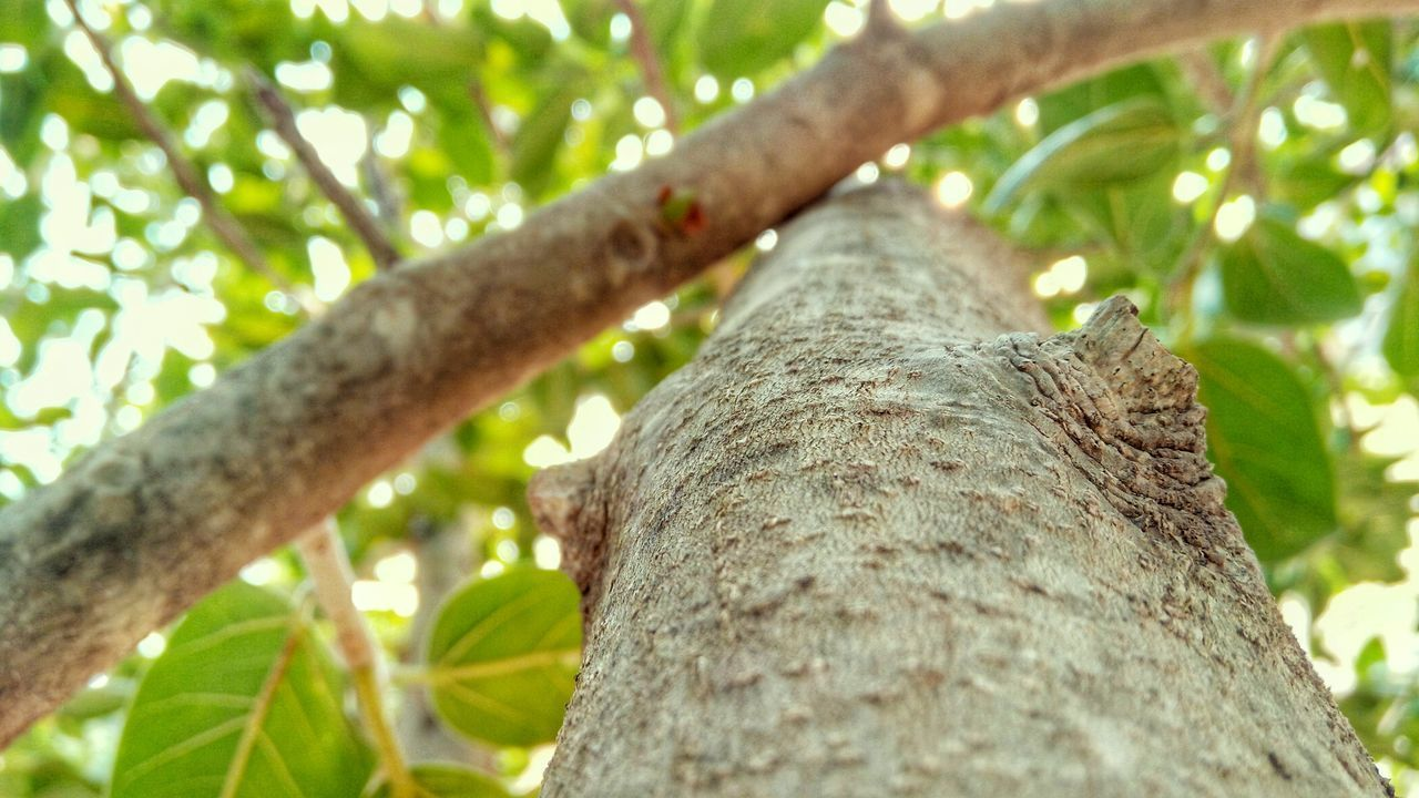 tree trunk, tree, low angle view, nature, day, outdoors, branch, no people, focus on foreground, growth, close-up, animal themes, beauty in nature, animals in the wild, climbing