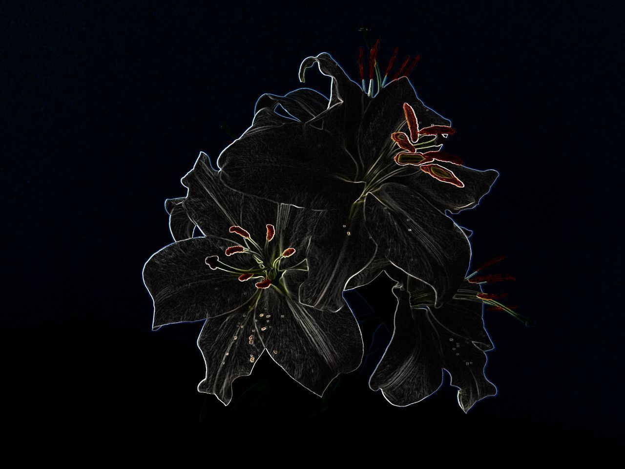 Black Background Fragility No People Petal Beauty In Nature Flowers, Nature And Beauty Flower Head Lilies Lily Flower Urban Lifestyle Flowers_collection Black Background White Flower Fleur De Lis Plant Indoors  Indoors  Artistic Photo Noirphotography Filtered Image Close-up Night Nature Flower Freshness