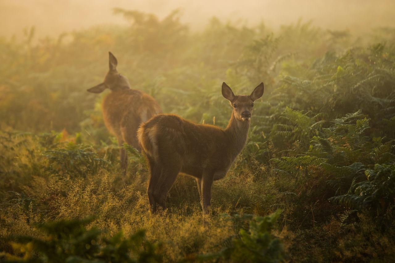 Beautiful stock photos of sunrise, Atmospheric, alertness, animal Themes, brown