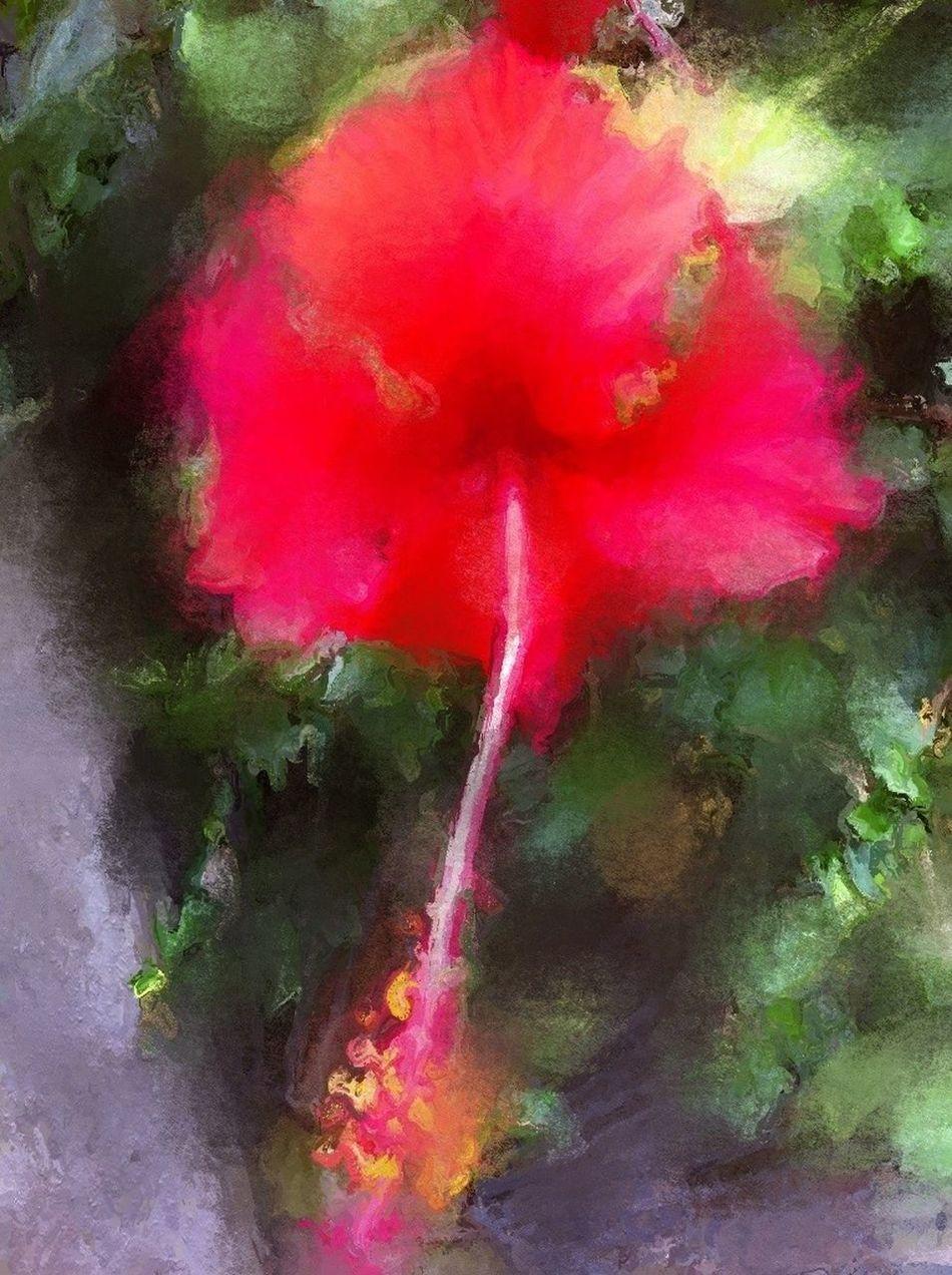 Kembang Sepatu NEM Painterly Flowerporn Iphoneart