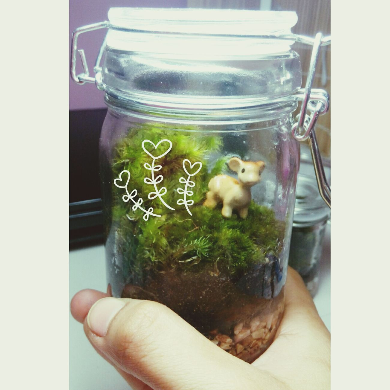 My terrarium First Eyeem Photo