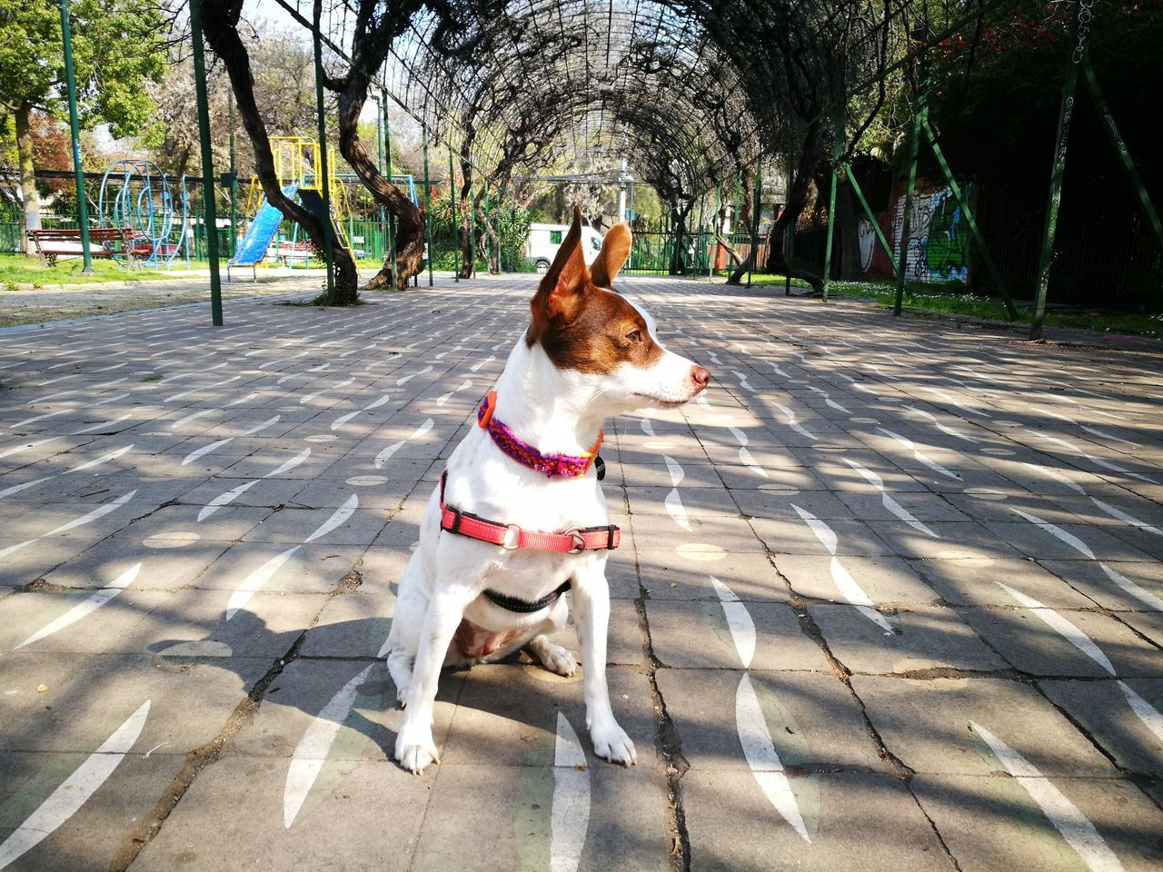 Pets Dog Domestic Animals One Animal Animal Themes Outdoors Shadow Sunlight No People Sand Day Tree Mammal Protruding Nature Soypanchita
