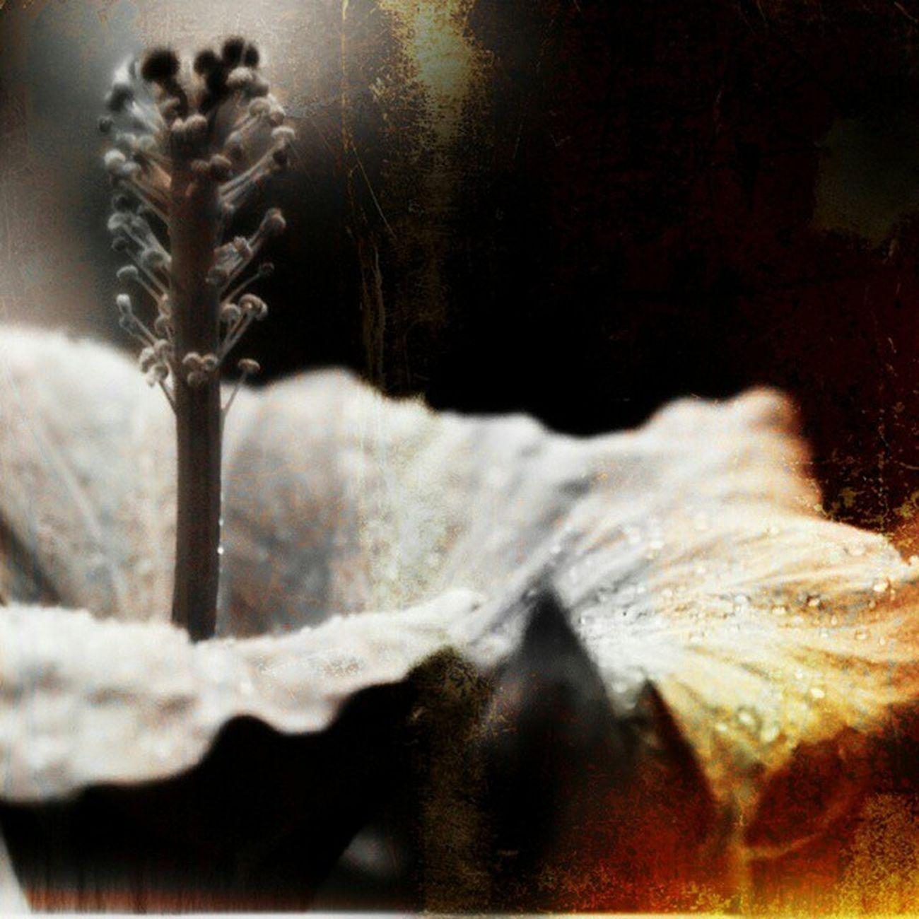 Petite création en ce jour grisouille Flower Design Photography Emotionaldesign
