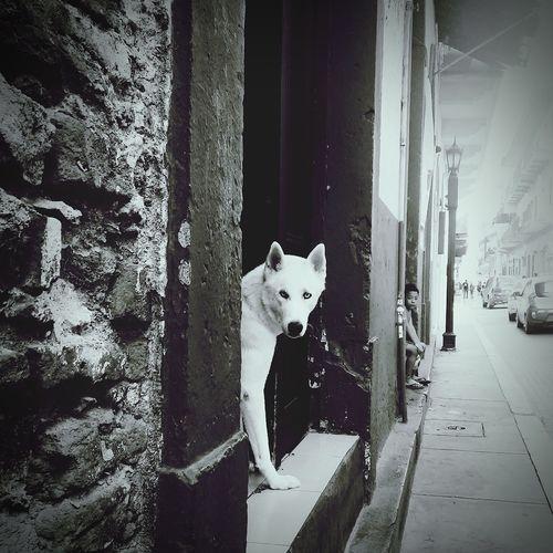 2 almas Nobles Panamá Casco Viejo Panama Noble Blacj And White Dog Niño Streetphotography