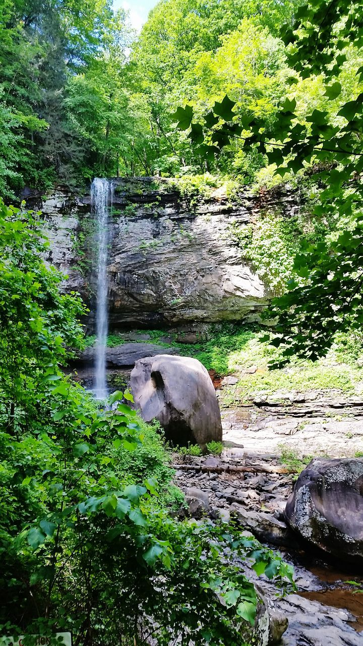 nature, green color, tree, animal themes, mammal, one animal, day, domestic animals, outdoors, no people, beauty in nature, water, waterfall, rock - object, scenics