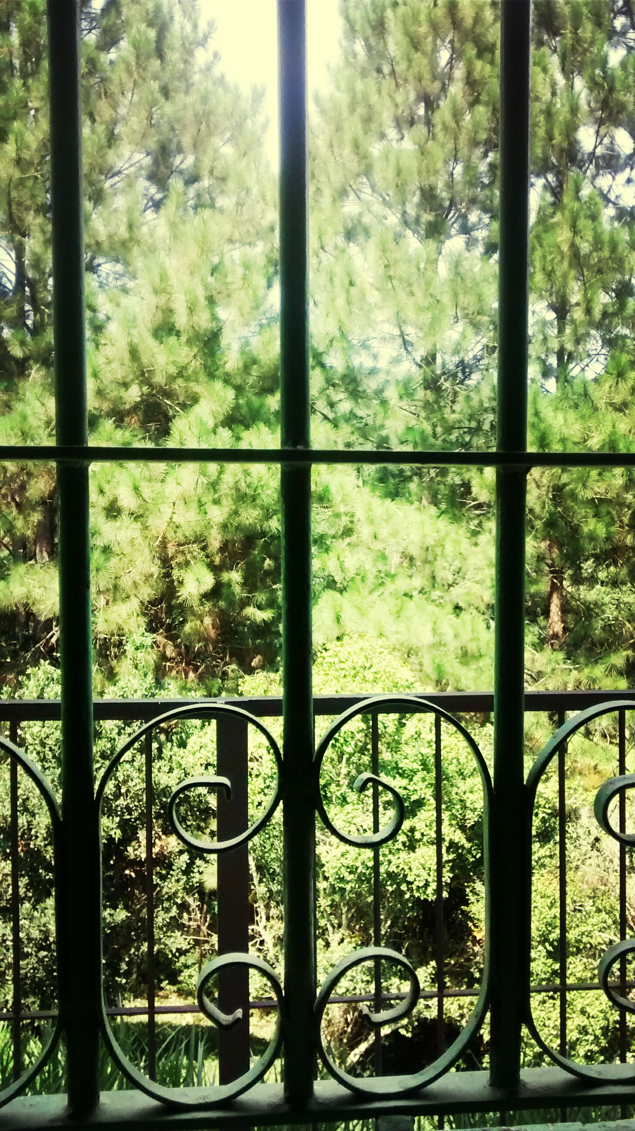 tree, window, indoors, green color, growth, glass - material, transparent, day, metal, nature, sunlight, tree trunk, plant, railing, no people, green, fence, park - man made space, lush foliage, branch