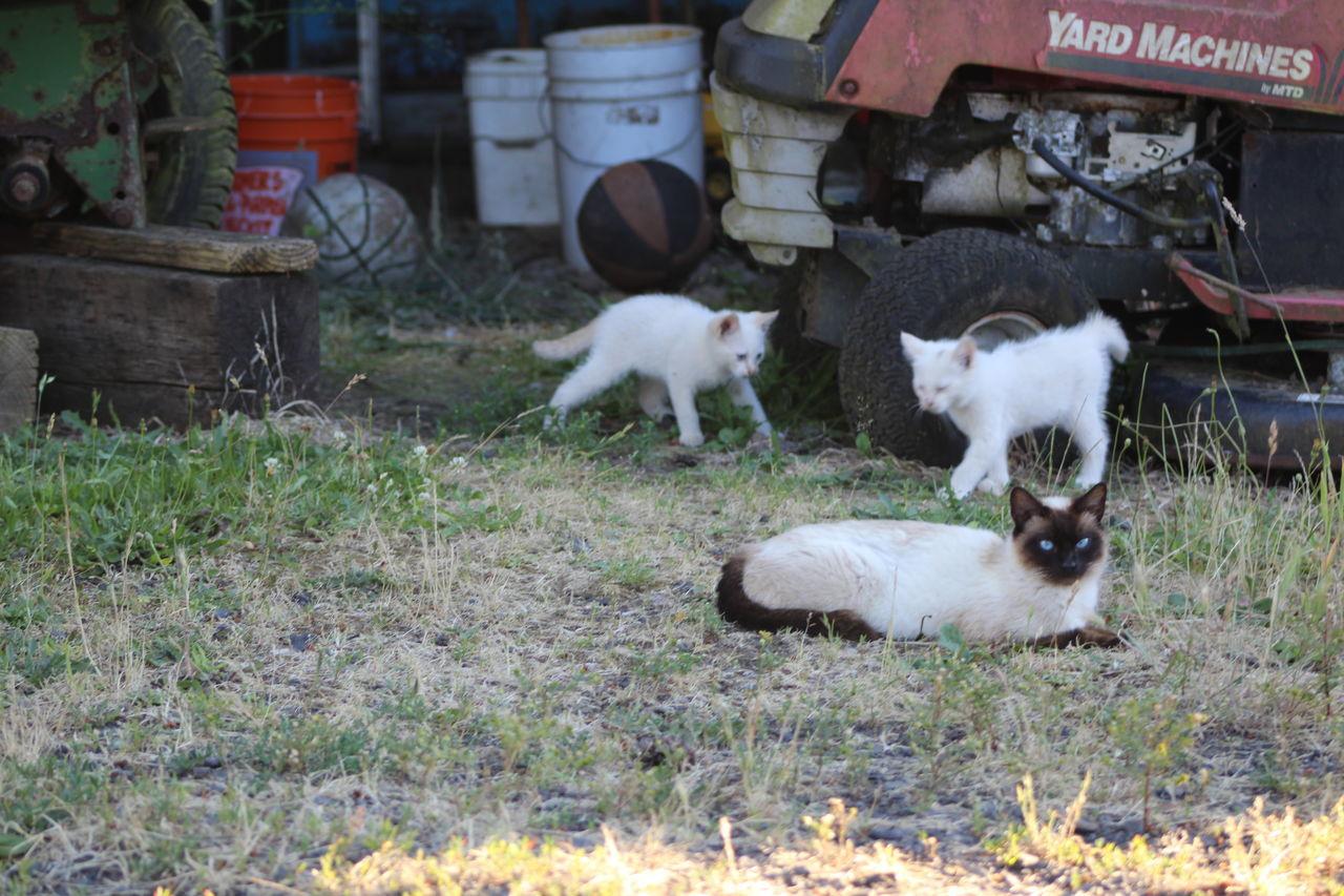 Beautiful stock photos of baby katzen, animal themes, domestic animals, mammal, livestock