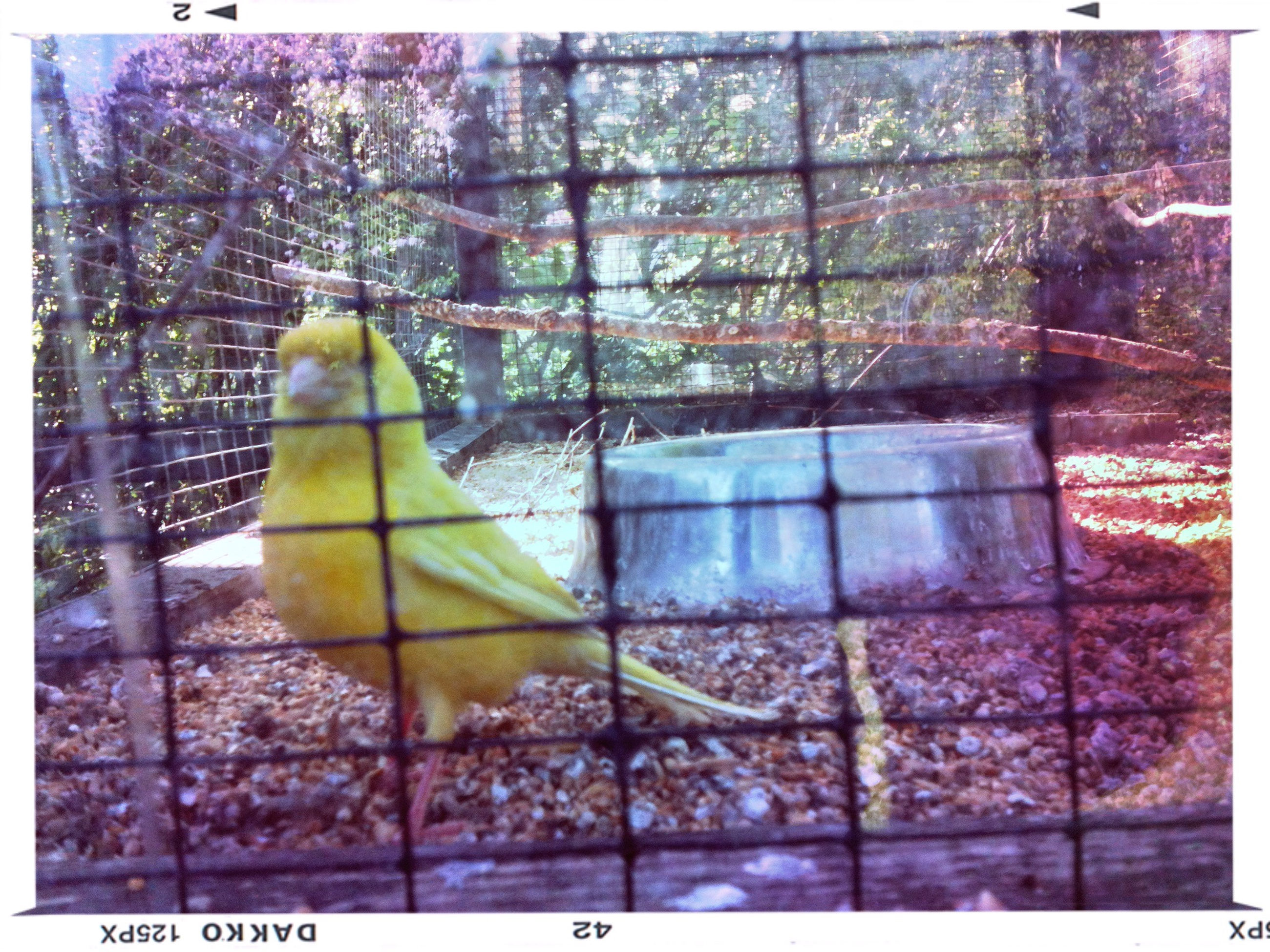 animal themes, one animal, animals in the wild, wildlife, transfer print, bird, tree, perching, auto post production filter, animals in captivity, cage, branch, animal representation, parrot, mammal, domestic animals, two animals, day, no people, full length