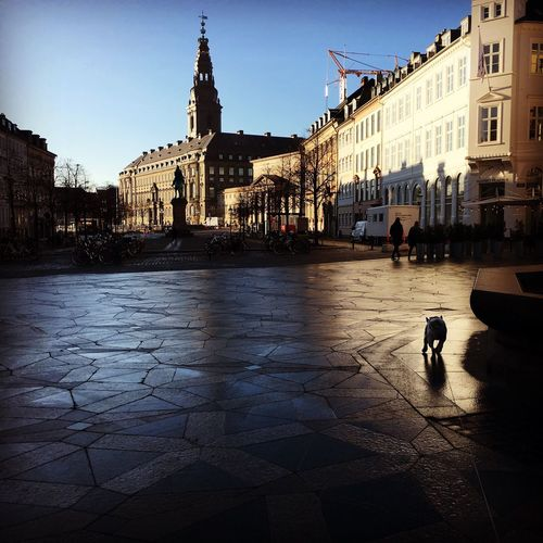 Copenhagen at 8am. Little dog in the city. Frenchbulldog Copenhagen Denmark Morning Thefrenchworkhard First Eyeem Photo