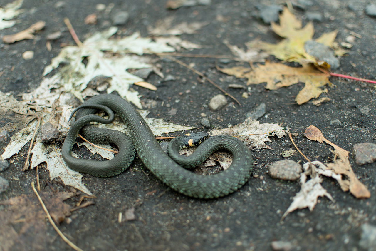 Animal Wildlife Animals Animals In The Wild Autumn Nature Nature Outdoors Reptile Snake
