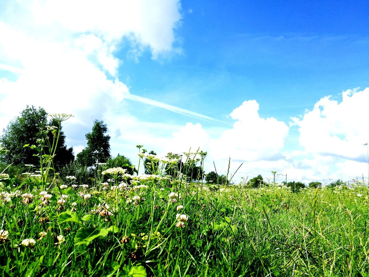growth, field, nature, grass, sky, beauty in nature, tranquil scene, scenics, tranquility, green color, no people, cloud - sky, plant, day, landscape, outdoors, agriculture, rural scene, tree, freshness