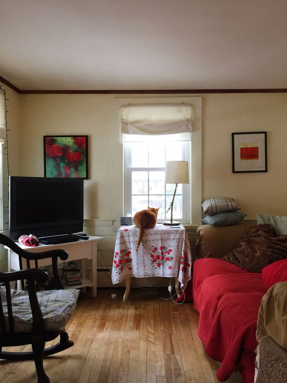 Cat Home Cozy Colorful Winter Orange Cat Orange Tabby Vintage Pattern Showcase: February Window Cats Pets Softness Soft Small Space Small Room Living Room Couch Sofa Rocking Chair Sunlight Soft Light Sun Through Window