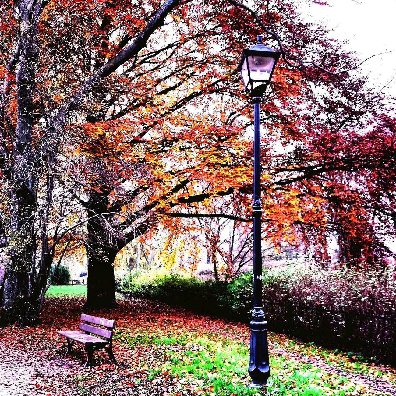 Autumn Autumn Colors Autumn Collection Autumn Leaves Autumn Trees Nature Nature_collection Nature Photography Nature On Your Doorstep Poland Amazing Poland