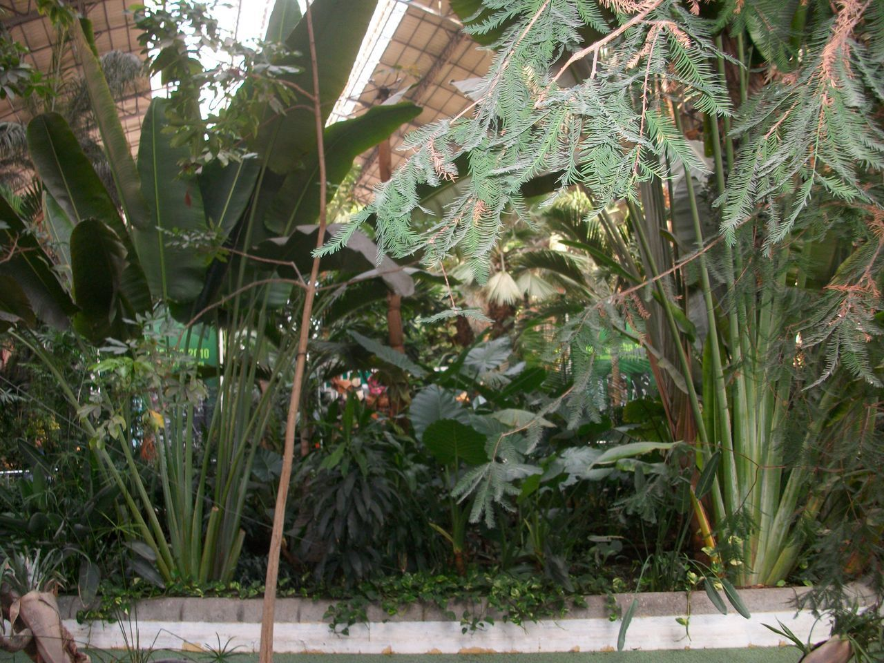 Atocha Train Station Atocha Beauty In Nature Green Color Greenhouse Growth Indoor Leaf Palm Tree Plant Train Station Tree