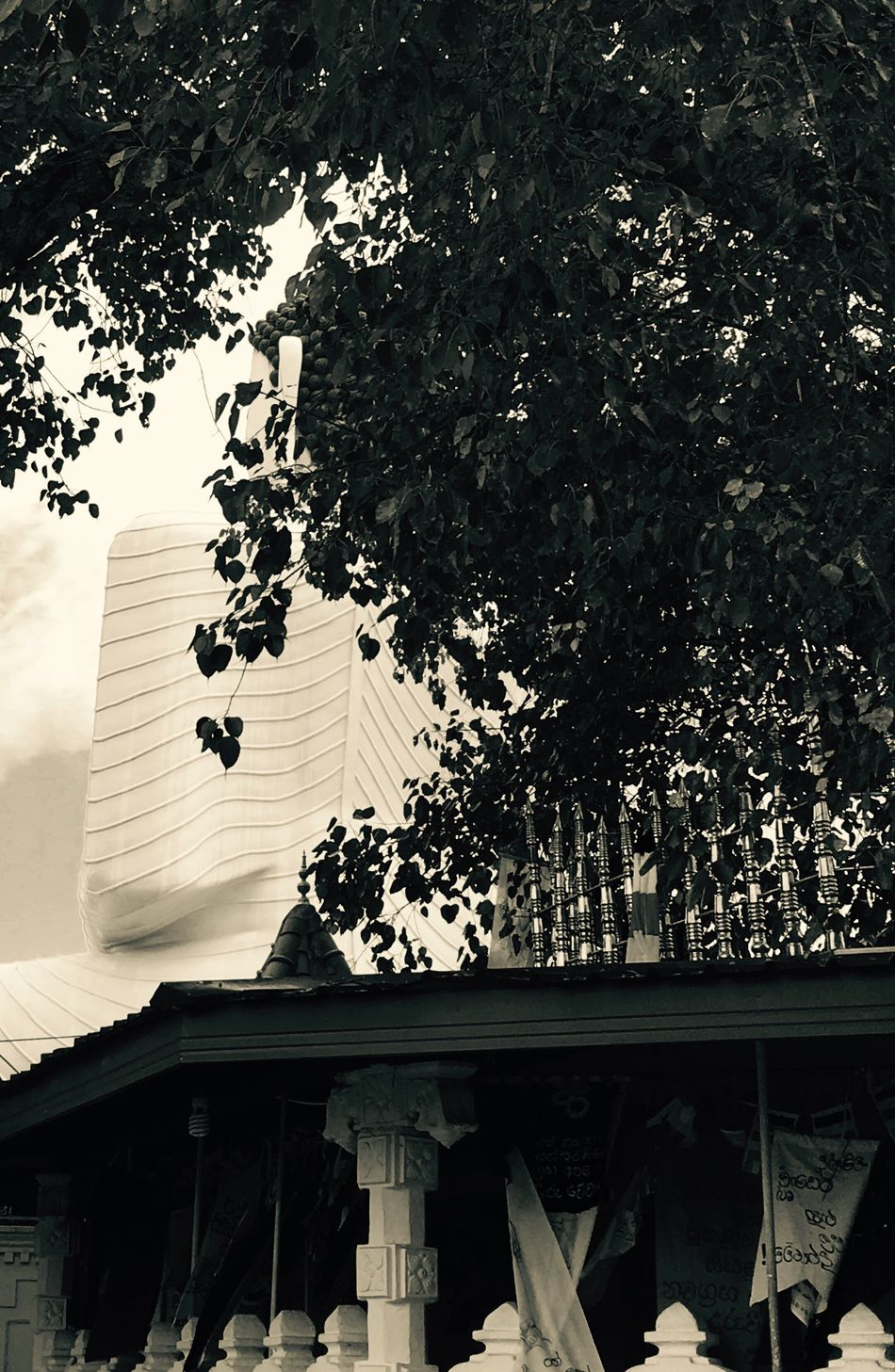 Behind a philosophy Buddha Buddah Statue Sri Lanka Temple Summer Outdoors First Eyeem Photo
