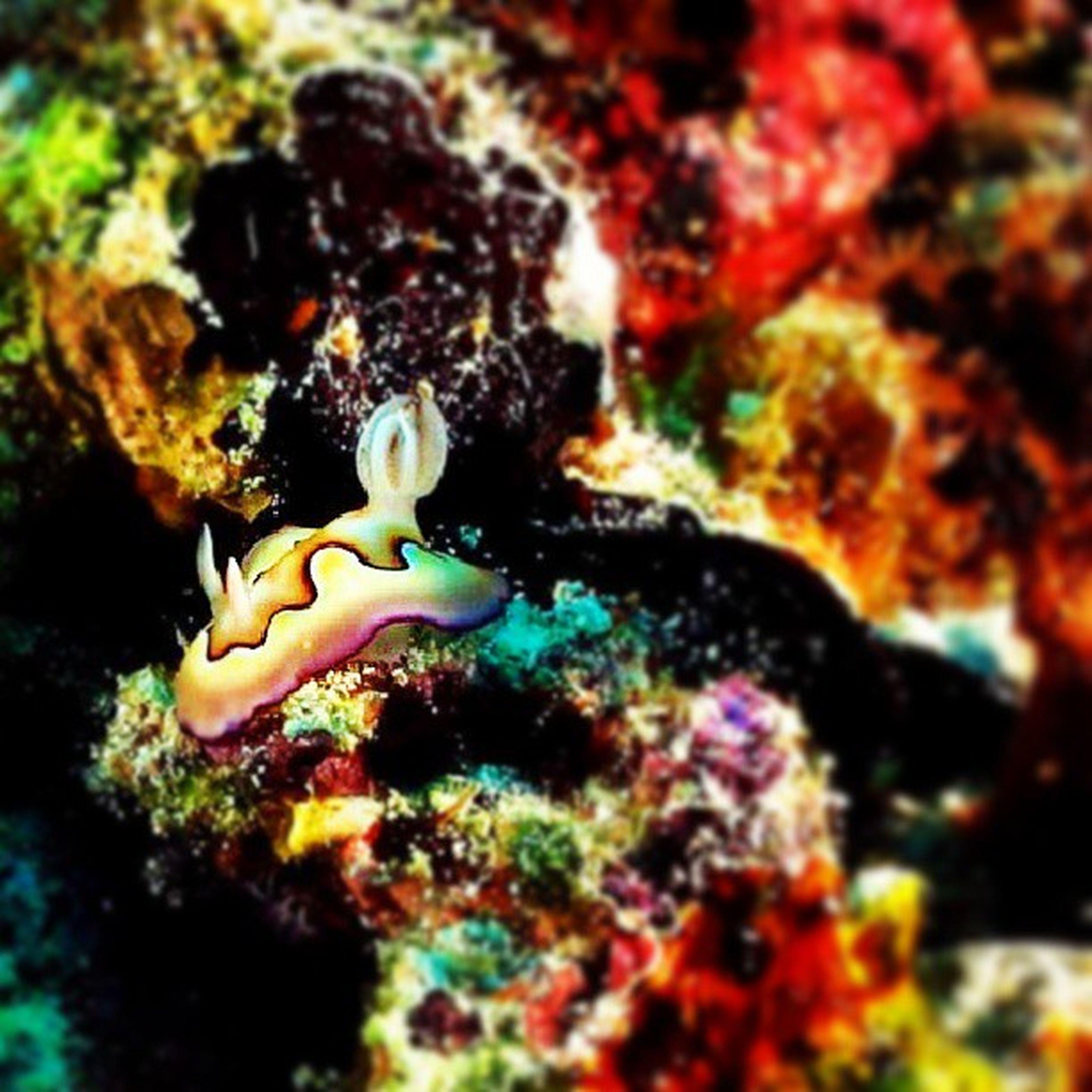 underwater, sea life, undersea, fish, animal themes, swimming, animals in the wild, coral, wildlife, close-up, aquarium, water, sea, indoors, one animal, rock - object, nature, multi colored, aquatic, selective focus