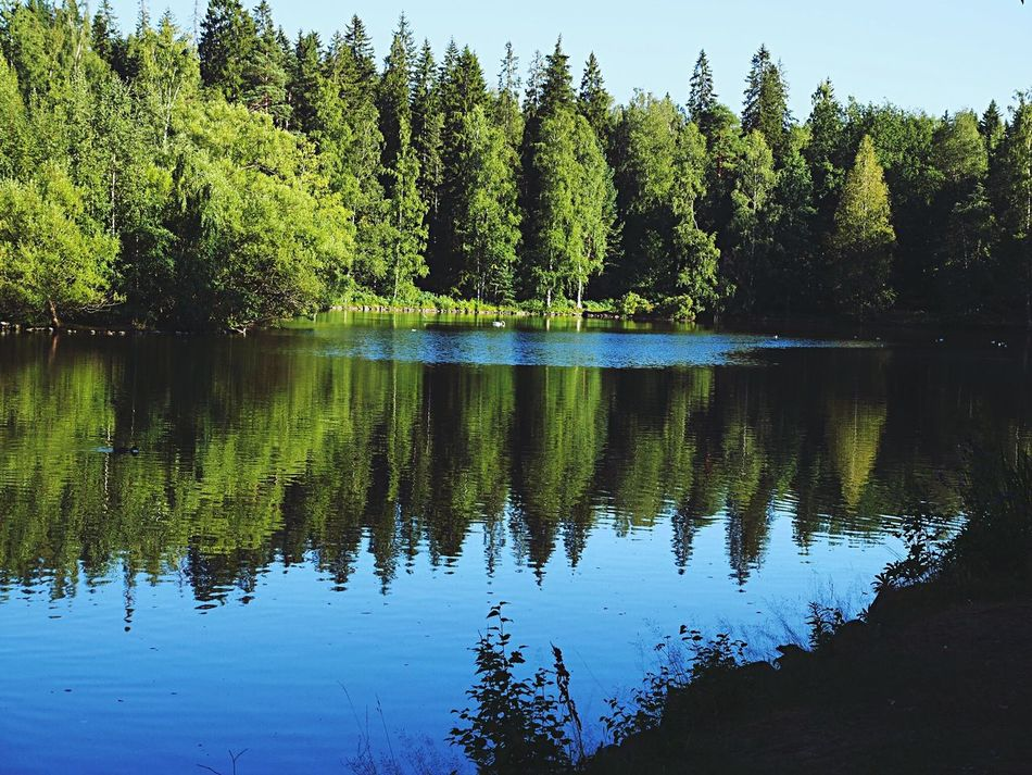 Reflections at the Aulanko national park. 🌲 Water Lake Reflection Tree Tranquil Scene Tranquility Scenics Calm Mid Distance Majestic Beauty In Nature Nature Non-urban Scene Growth Idyllic Waterfront Symmetry Standing Water Blue Green Aulanko National Park