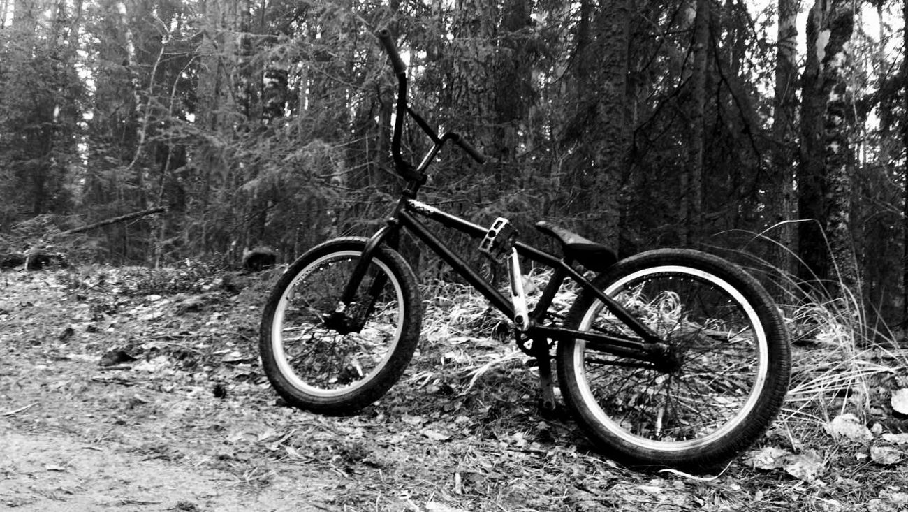 Bicycle Bmx  Bmx Is My Life Bmxlife Love Forest Monster First Eyeem Photo
