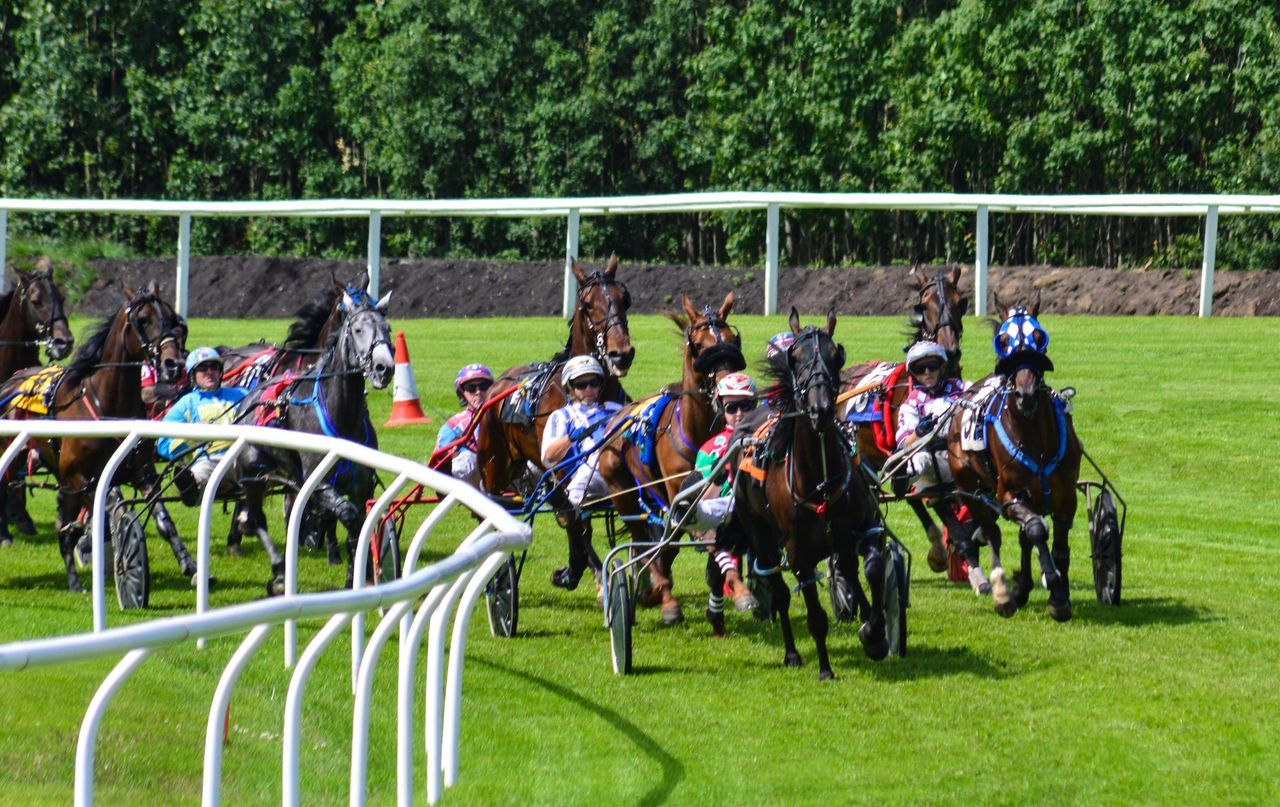 Harness Race Horse Harness Racing Speed Equine Equinephotography Sports Photography Musselburgh