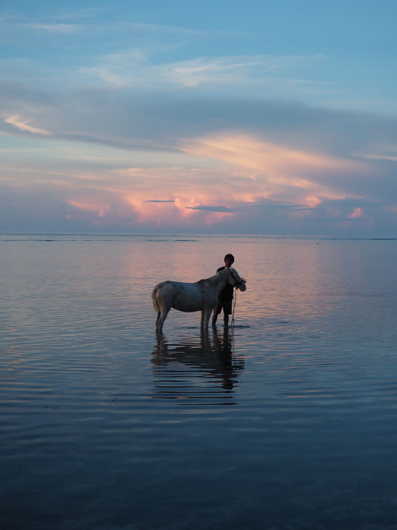 Animal Beauty In Nature Cloud - Sky Horizon Over Water Horse Horse Bathing Idyllic Mammal Nature Ocean Scenics Sunset Tranquil Scene Tranquility Water