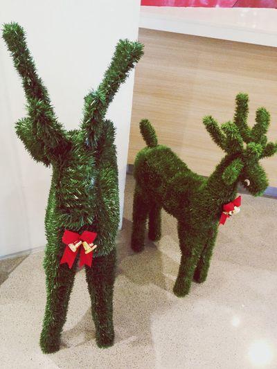 Hi reindeer r u feeling ? ??
