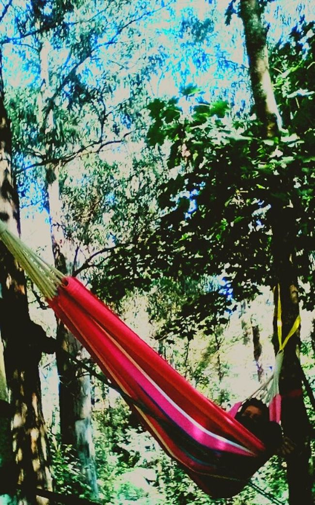 Relaxing Hanging Out Tree Hugger Taking Photos Art Sun Magic 2mp Home In The Garden In The Bush