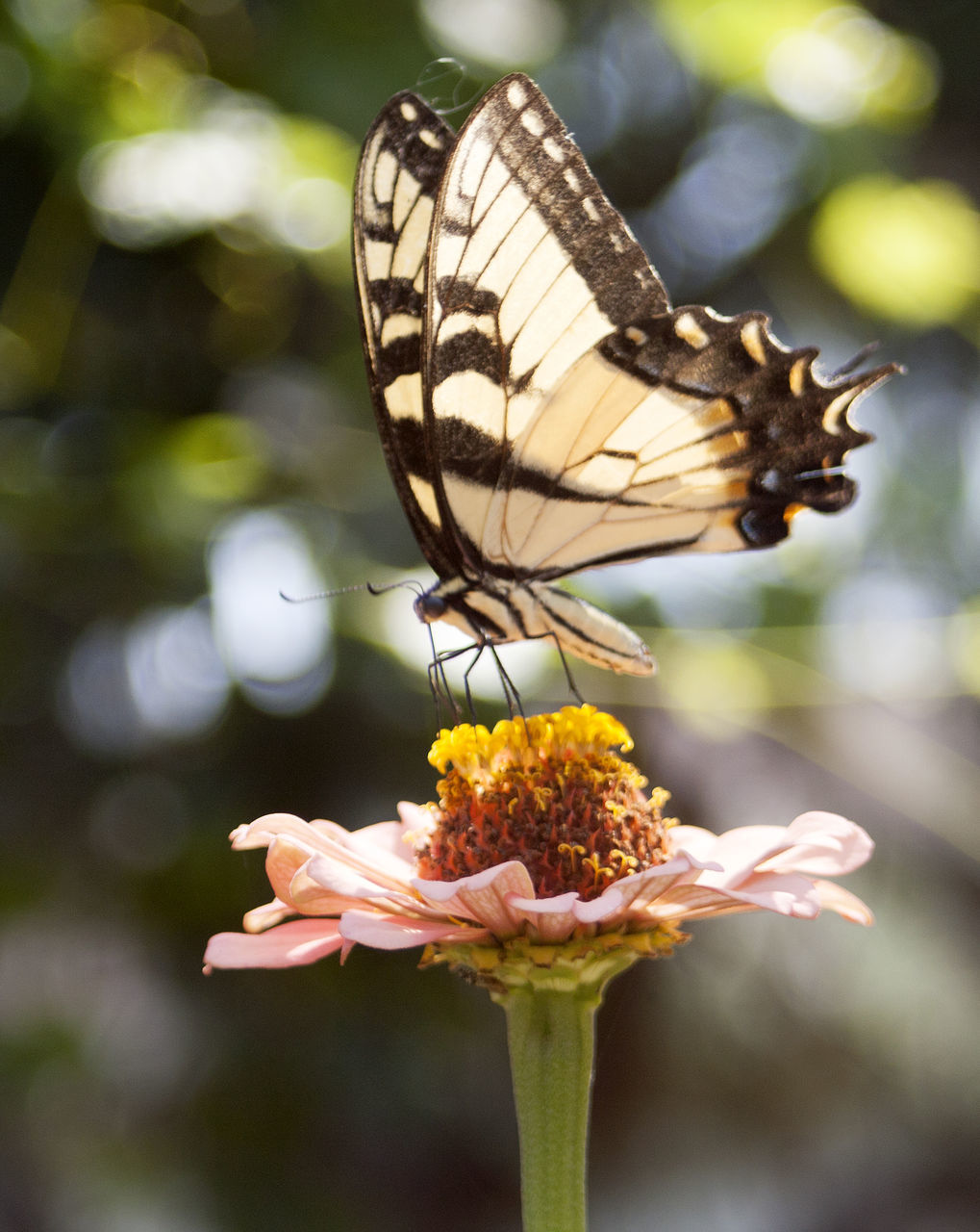 Close-Up Of Butterfly On Flower During Sunny Day