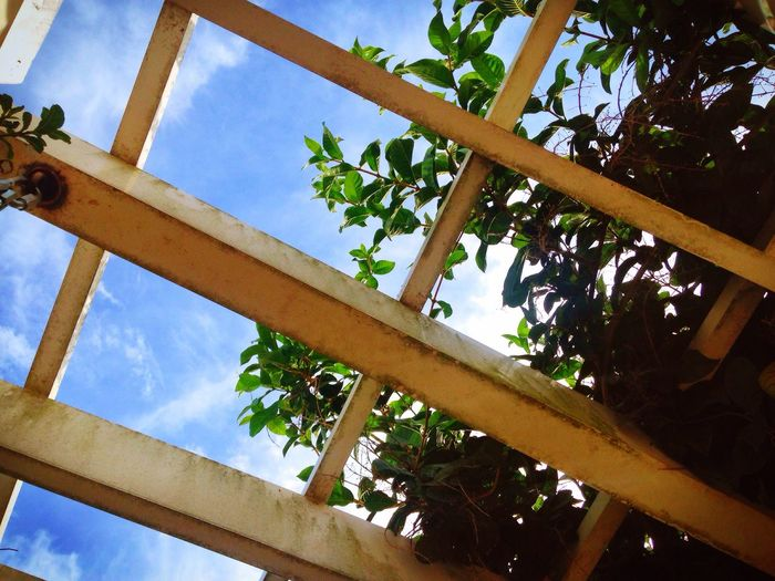fresh sights Low Angle View Tree Sky Plant Day Growth Outdoors No People Tranquility Scenics Architectural Column