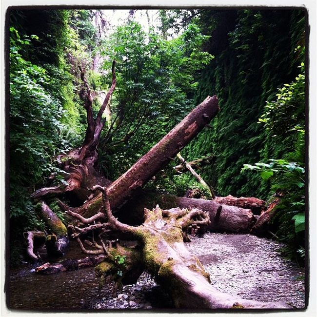 Fern Canyon Nature On A Hike EyeEm Nature Lover Kon-Tiki: Your Adventure