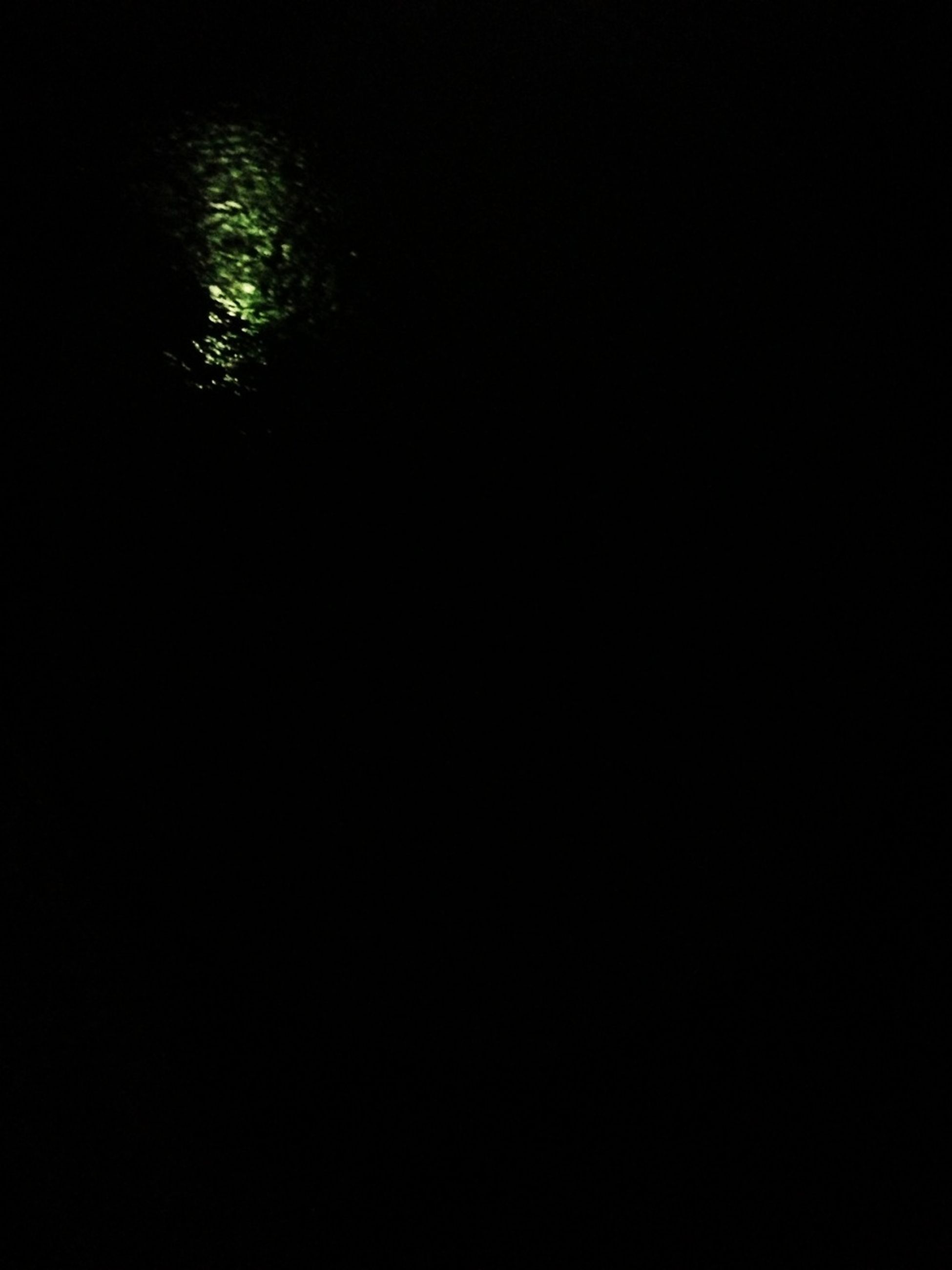 night, dark, tranquility, tree, copy space, nature, growth, low angle view, silhouette, beauty in nature, tranquil scene, no people, illuminated, outdoors, backgrounds, light - natural phenomenon, scenics, clear sky, idyllic, black background