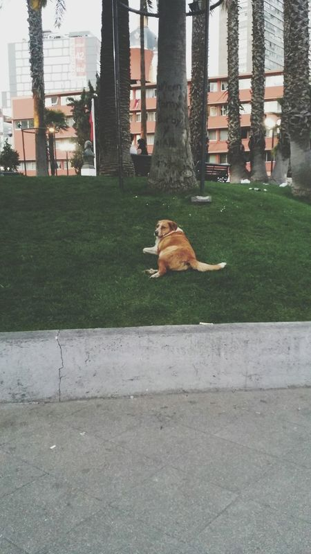 Relax Streetdogs Grass Resting Green Color Outdoors City Life Day Picoftheday EyeEm Nature Lover