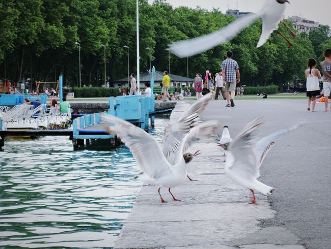 Two SeagullsBrawling about the best Place To Be ... LoudRow Lake Annecy France  Wequarrelwelaugh Noisy Neighbour Nature On Your Doorstep Scolding