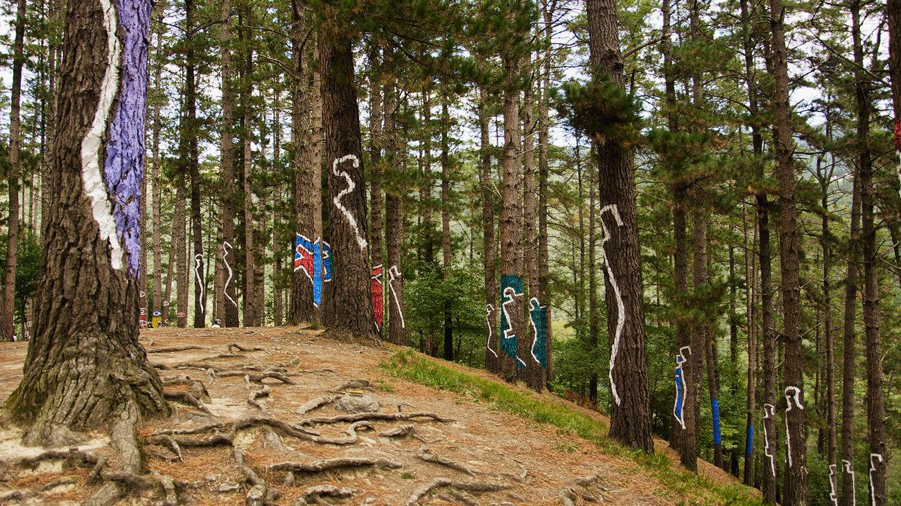 Omako Basoa Bosque Animado Bosque De Oma Entorno Natural Forest Natural Forest Nature Vizcaya