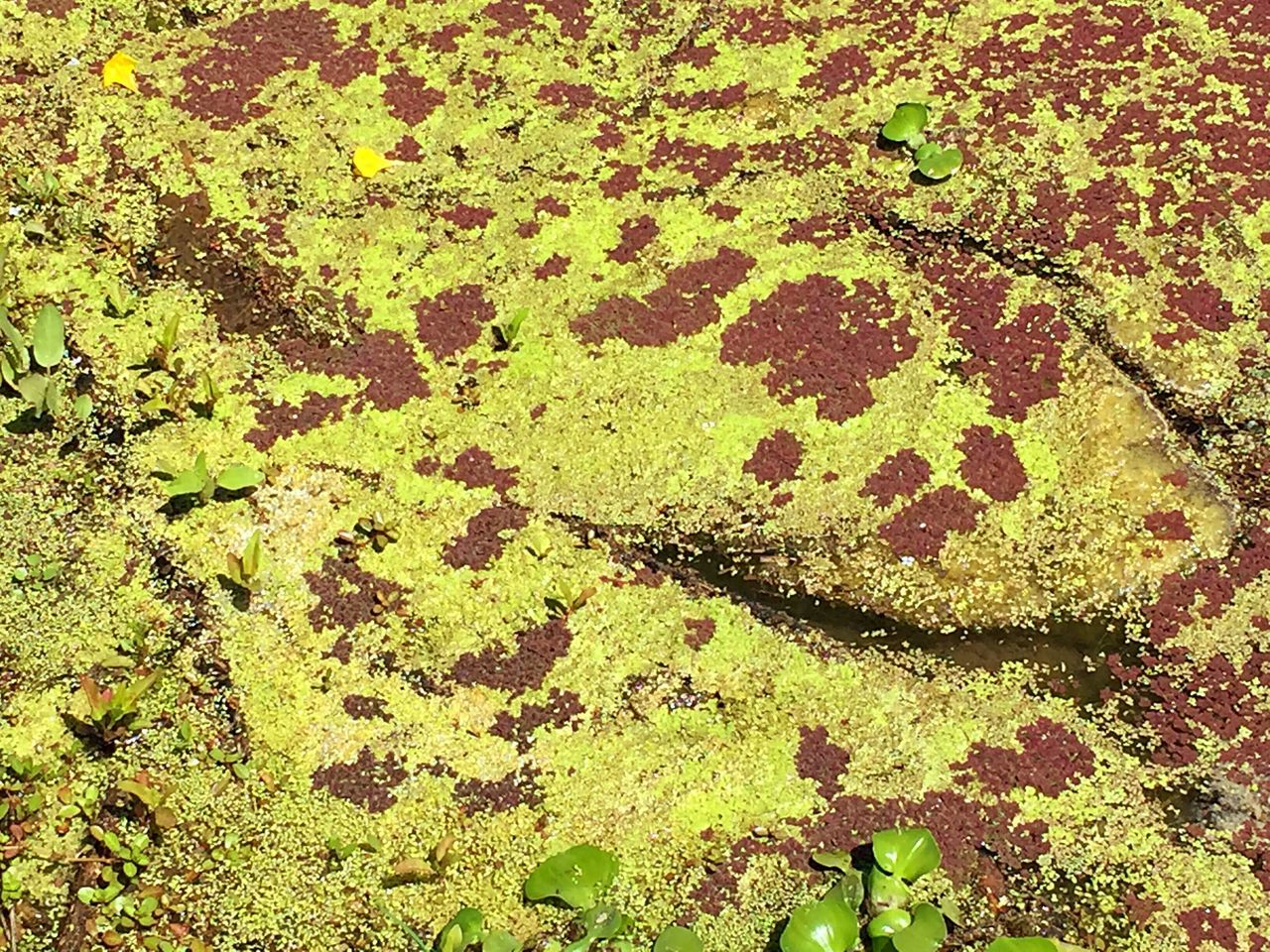 Algae with growing plants Full Frame Backgrounds Green Color Textured  Close-up No People Pattern Leaf Day Outdoors Nature Growth Ink