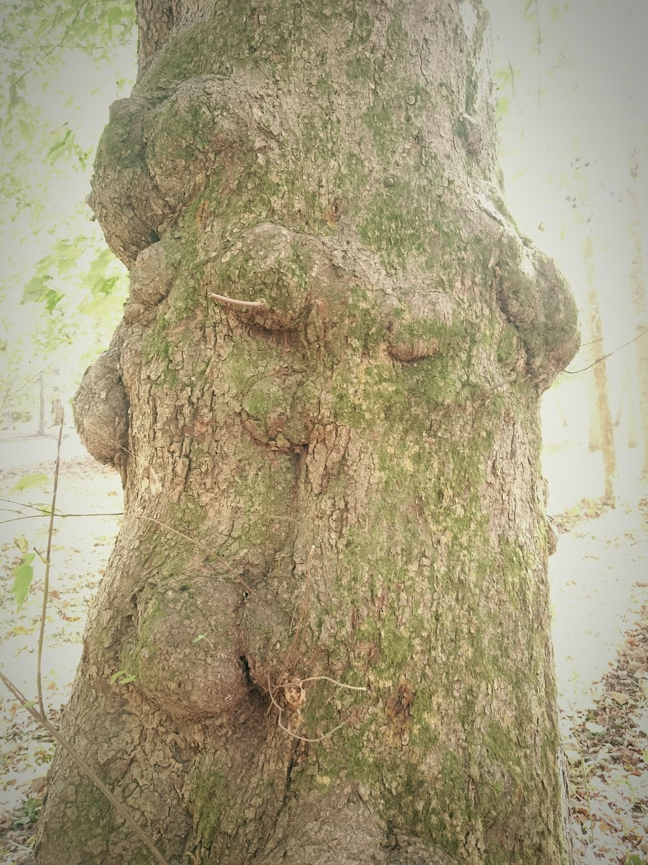 Elemental Tree Spirit Nature Tree Trunk Outdoors Betweenworlds Iam Seer Secrets Moss Spirit Sleepytrees Treeple