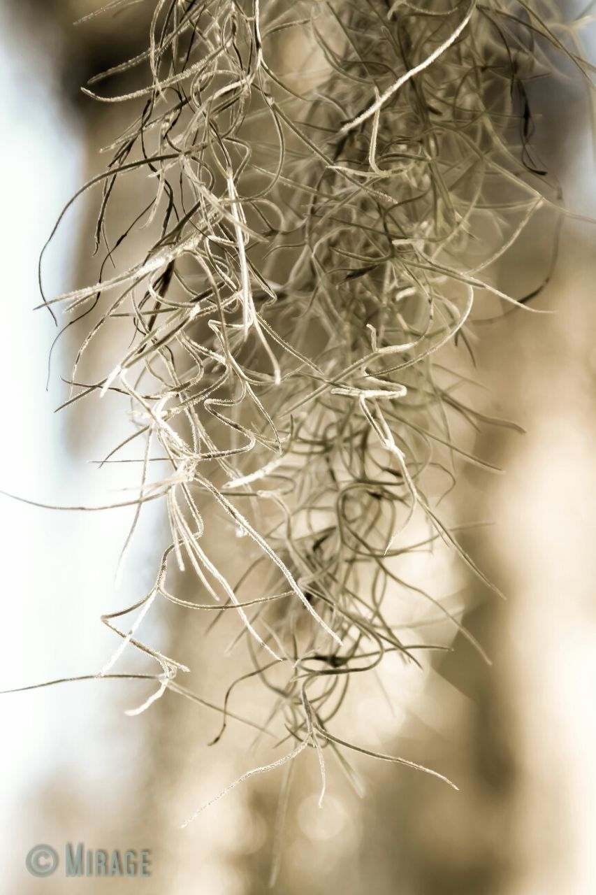dry, close-up, no people, nature, day, dried plant, outdoors, food