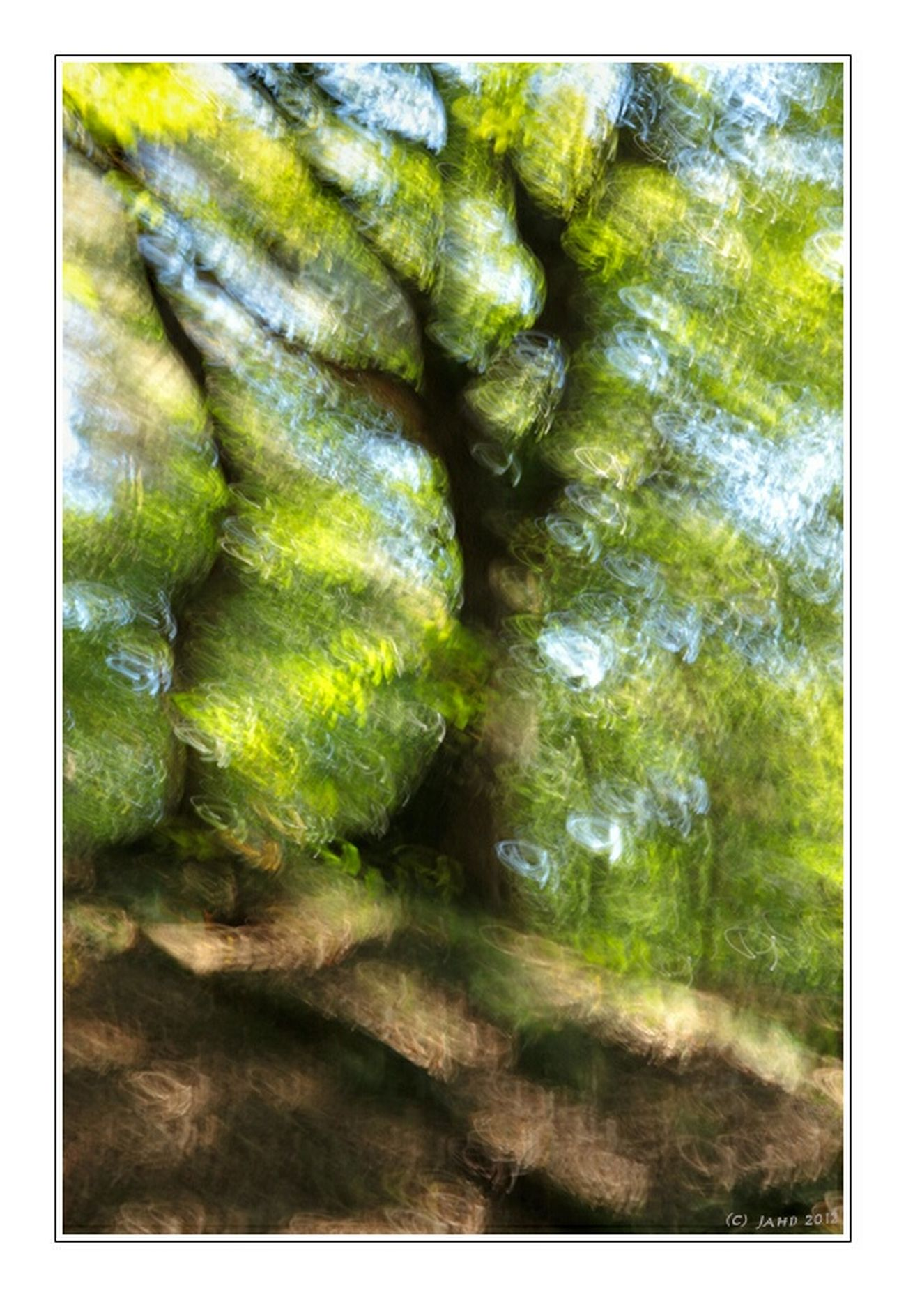 Imressionistic trees Trees Tree Treescollection Impressionism Impressionen Impression Woods Experiment Experimental Experimenting... Green Greenery Nature_collection Nature Nature Photography Naturelovers Experiments Unscharf Unsharp Abstract Verwischt Verwischtes Bild Verwackelt Impressions Tree_collection