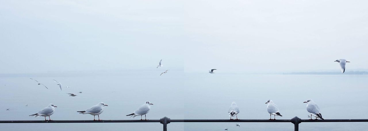 """I took these photos at Bodensee and realised that the distance between these birds are very even, then I googled and found this answer on QUORA: If you note the distances over time, the initial distance is essentially """"wing space;"""" the space between birds needed to land from flight and to take off using outspread wings. It's a very practical spacing that prevents wing collisions when landing or taking off. Once landed, certain species like to suggest together for warmth, social grooming, and so on, so the spacing shrinks. The spacing then is determined by family membership (families within a flock tend to rest together), social rankings, comfort, and factors less related to the need for wing space. Once a flocks starts to get the idea that they are about to move off the wire to go find food, continue a migration, etc., they begin to edge away from one another to obtain the space they need to spread their wings. -- Break The Mold Bird Bodensee"""