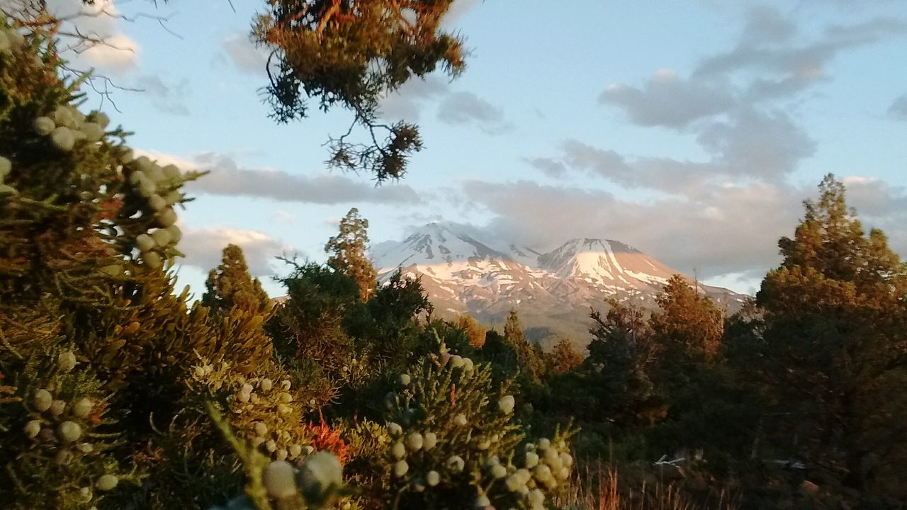 Mt. Shasta - Divine Mother , Union with thy Flowing Sacred Water...Life-Full Energy *!* sparks a joyous exuberance ! in me THANK- YOU Mother for blessing us ! Siskiyou Co. CA First Eyeem Photo